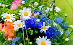 Диктант ''Квіти'' (156 слів)