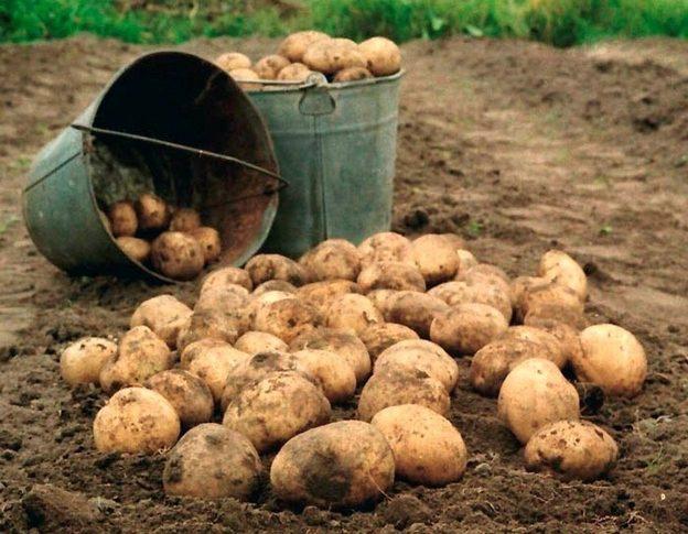 Диктант (+аудіо) ''Мати копає картоплю'' (За Євгеном Гуцалом) 223 слова
