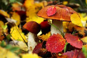 Диктант (+аудіо) ''Осінні гриби'' (За Дмитром Кешелею) 200 слів